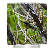 Don't Look Here Bird Shower Curtain