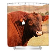 Dont Mess With The Bull Shower Curtain