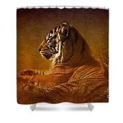 Don't Wake A Sleeping Tiger Shower Curtain