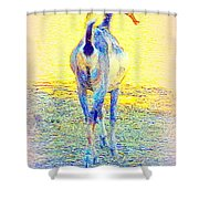 Dont Walk Out On Me Baby, Stay With Me Forever  Shower Curtain