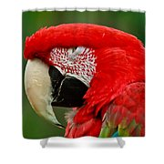 Dont You Dare To Stare Macaw Shower Curtain