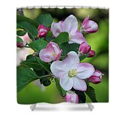 Door County Apple Blossoms Shower Curtain