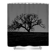 Dormant Tree On Hill Shower Curtain