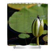 Dot-tailed Shower Curtain
