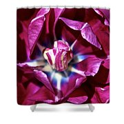 Double Amethyst Shower Curtain