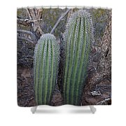 Double Barrel Saguaro Shower Curtain