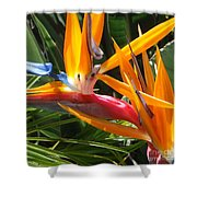 Double Bird Of Paradise - 1 Shower Curtain