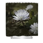 Double Bloodroot Shower Curtain