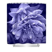 Double Columbine In Blue Shower Curtain
