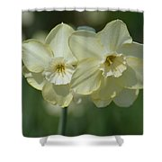 Double Cream Delights Shower Curtain