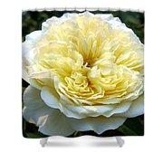 Double Cream Rose Shower Curtain