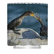 Double-crested Cormorants Shower Curtain