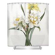Double Daffodil Shower Curtain