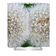 Double Dandelion Wishes Shower Curtain