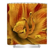 Double Daylily Shower Curtain