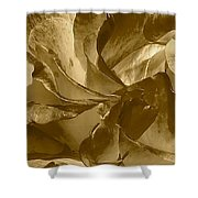 Double Delight Rose 2 Shower Curtain