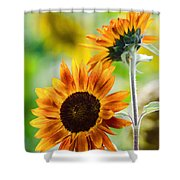 Double Dose Of Sunshine Shower Curtain