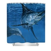 Double Header Makaira Nigricans, Blue Shower Curtain