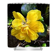 Double Hibiscus Costa Rica Shower Curtain