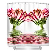 Double Pink Gerbera Flood Shower Curtain