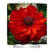 Double Poppy Shower Curtain