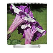 Double Purple Datura 8 Shower Curtain