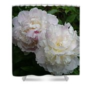 Double White  Peony Shower Curtain