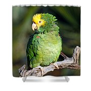 Double Yellow Headed Parrot Shower Curtain