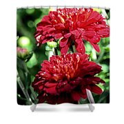 Doubled Red Mums Shower Curtain