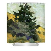 Douglas Fir In Washington Shower Curtain