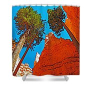 Douglas Firs On Wall Street On Navajo Trail In Bryce Canyon National Park-utah Shower Curtain