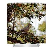 Dove In Autumn Oak Tree Lower Lake Ca Shower Curtain