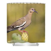Dove On A Cactus Bud Shower Curtain
