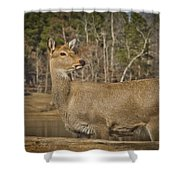 Down By The Duck Pond Shower Curtain