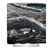 Down Tree Arch Shower Curtain