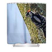 Downy Woodpecker - Male Shower Curtain