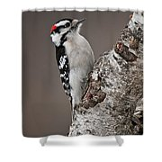 Downy Woodpecker Pictures 11 Shower Curtain