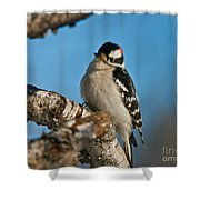 Downy Woodpecker Pictures 23 Shower Curtain