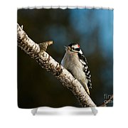 Downy Woodpecker Pictures 25 Shower Curtain