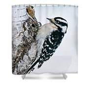 Downy Woodpecker Pictures 27 Shower Curtain