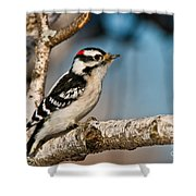 Downy Woodpecker Pictures 34 Shower Curtain