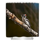 Downy Woodpecker Pictures 36 Shower Curtain