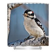 Downy Woodpecker Pictures 39 Shower Curtain