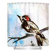 Downy Woodpecker Sumi-e Shower Curtain
