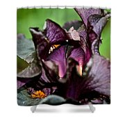Dracula's Flower Shower Curtain