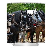 Draft Horses All In A Row Shower Curtain