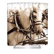 Draft Horses Enjoy A Day In Old Sacramento Shower Curtain