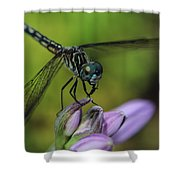 Dragon At Rest  Shower Curtain