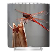 Dragon Fly- Br Shower Curtain
