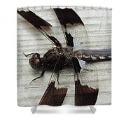 Dragon Fly Closeup Shower Curtain